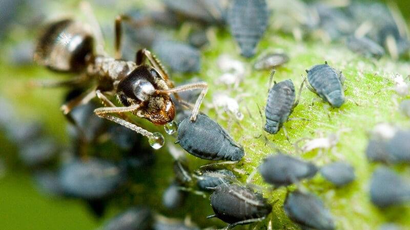Symptome und Behandlung von Ameisenbissen und Ameisenstichen