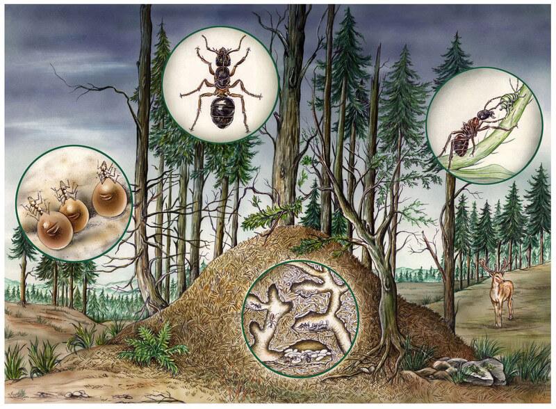 Ameisen Stiche