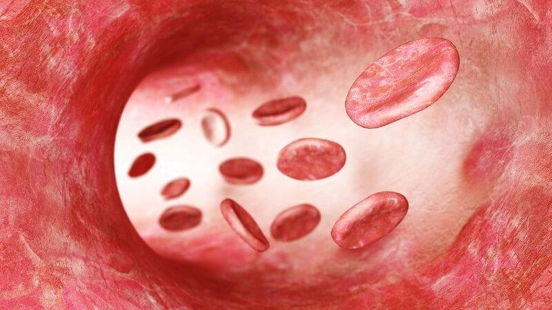 Beladung des Hämoglobins im Blut mit Sauerstoff