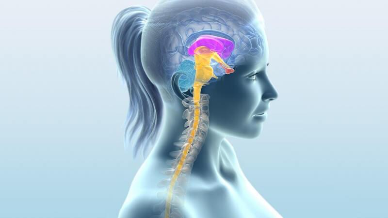 Wissenswertes zu Dopamin