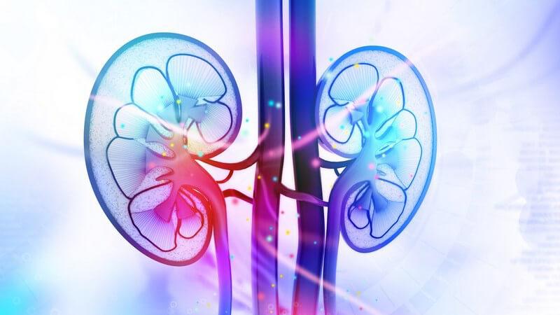 Wissenswertes zur Nierenfunktionsszintigrafie