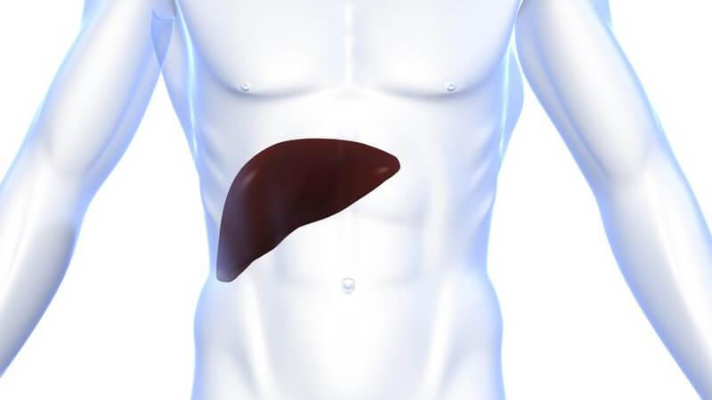 Wissenswertes zur Lebertransplantation