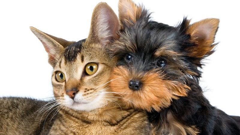 Viele Menschen möchten auch in der Urlaubszeit nicht auf ihr Haustier verzichten - Wir geben Tipps, was man bei der Mitnahme beachten muss und welche Alternativen es gibt