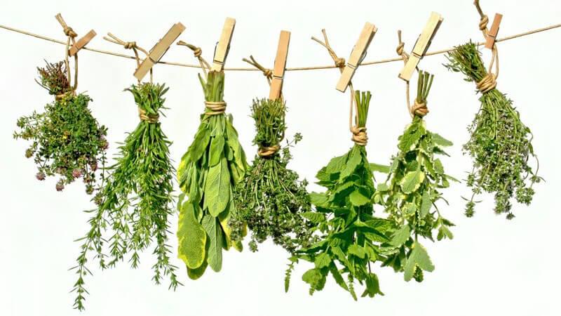 Wirkung und Anwendung von Bohnenkraut