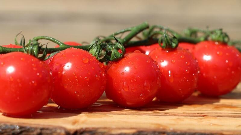 Tipps zur Aufbewahrung von Tomaten