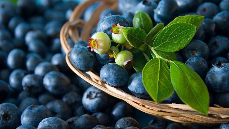 Heidelbeersoße - Rezepte und Kombinationsmöglichkeiten
