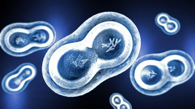 Wissenswertes zur regenerativen Mitochondrien-Medizin