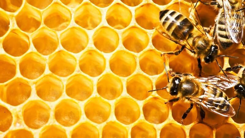 Wissenswertes über Bienenwachswickel
