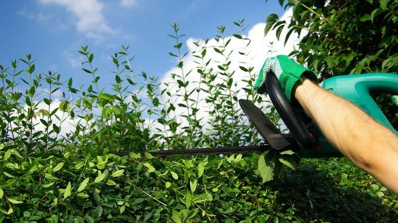 Elektro-Gartengeräte im Überblick
