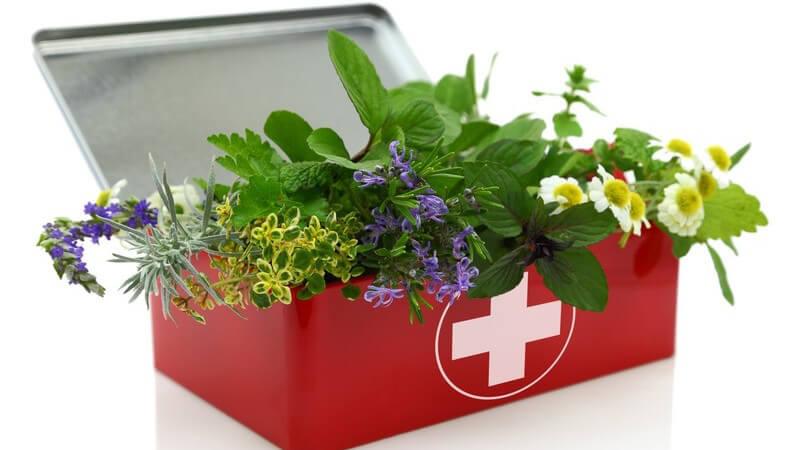 Wirksam sind mitunter Kamille, Lavendel, Ampfer oder Zimt