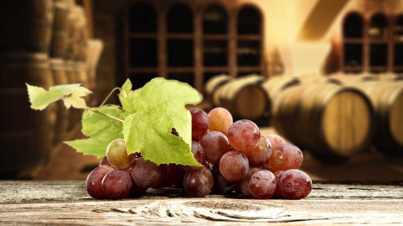 Wirkung und Anwendung von Traubenkernöl