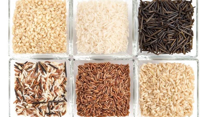 Der grüne Reis hat seine Farbe aufgrund der zu frühen Ernte des Korns