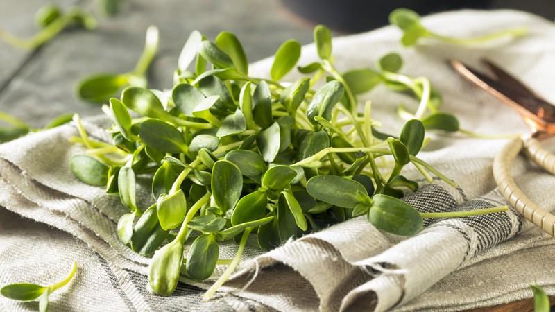 Die Sprossen können als Snack verzehrt sowie zur Verfeinerung von Salaten, Müslis und Suppen verwendet werden