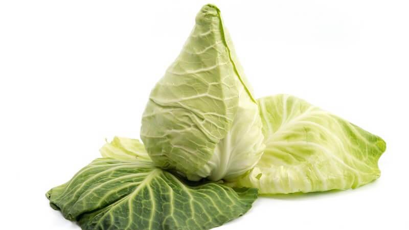 Aus Spitzkohl wird besonders gerne Sauerkraut hergestellt