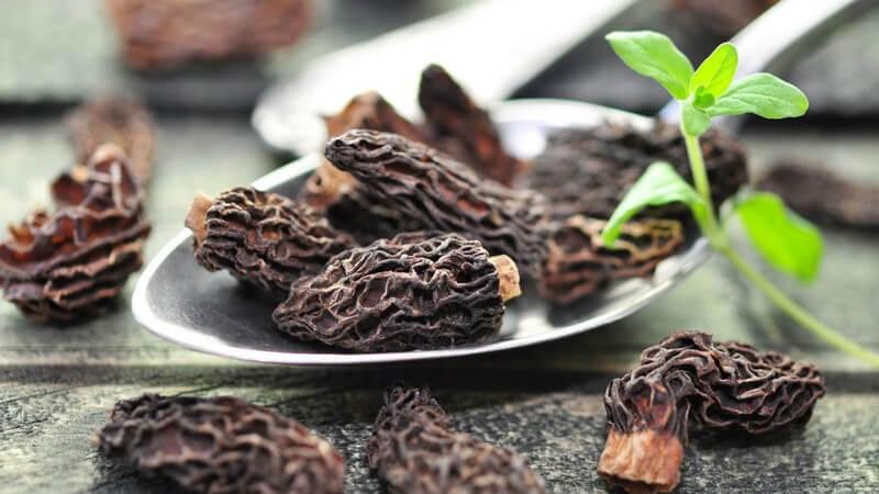 Speise-Morcheln stehen unter Naturschutz und lassen sich braten oder auch kochen - es besteht Verwechslungsgefahr mit der giftigen Frühlingslorchel