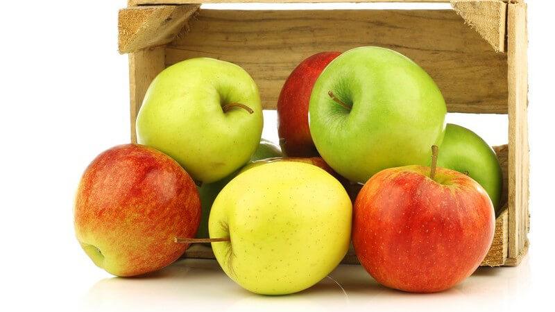 Obstarten, die Sammelbalgfrüchte entwickeln, zählen hierzulande zu den beliebtesten Sorten, z.B. Äpfel, Birnen oder Quitten