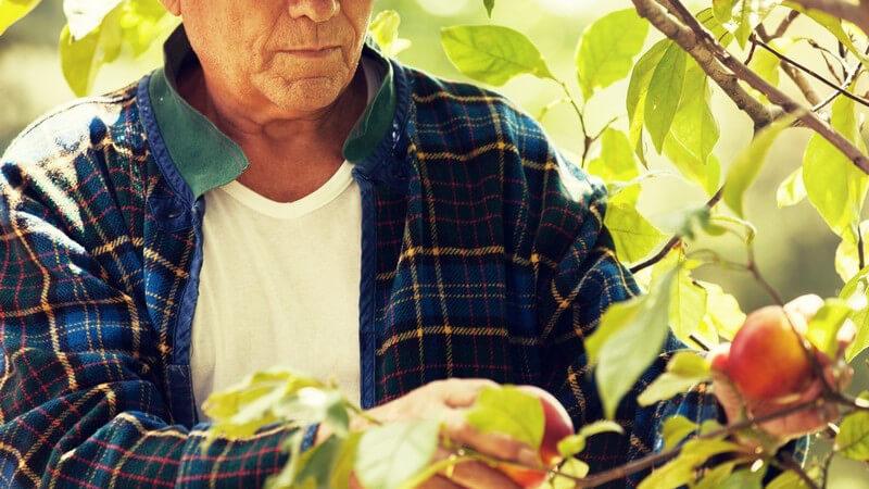 Zu den beliebtesten Steinobstarten zählen Kirschen, Pflaumen, Aprikosen und Pfirsiche