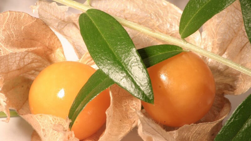 Kapstachelbeeren verarbeitet man häufig zur Marmelade