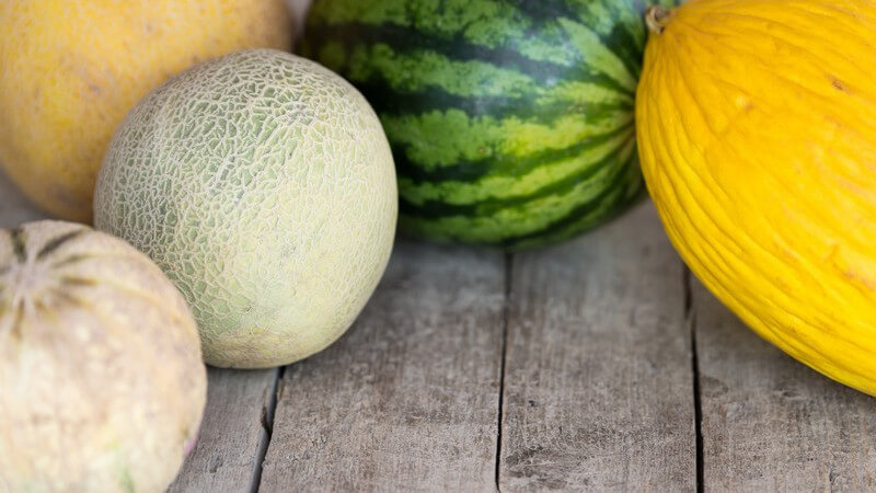 Wissenswertes zur Nara-Melone