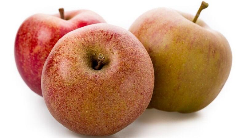 Äpfel der Sorte Schöner aus Boskoop sind im Verlgeich zu anderen Sorten eher groß