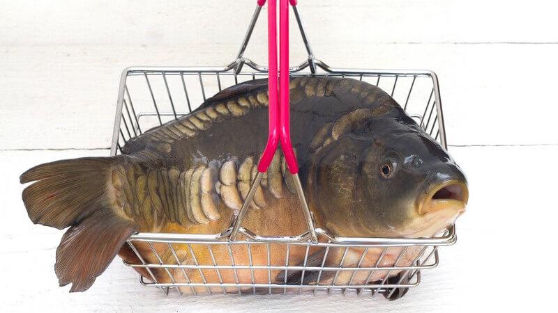 Dieser Fisch wird meistens gekocht oder gebacken