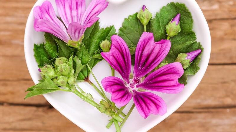 Hilft bei Entzündungen, Bronchitis und kann Fieber senken