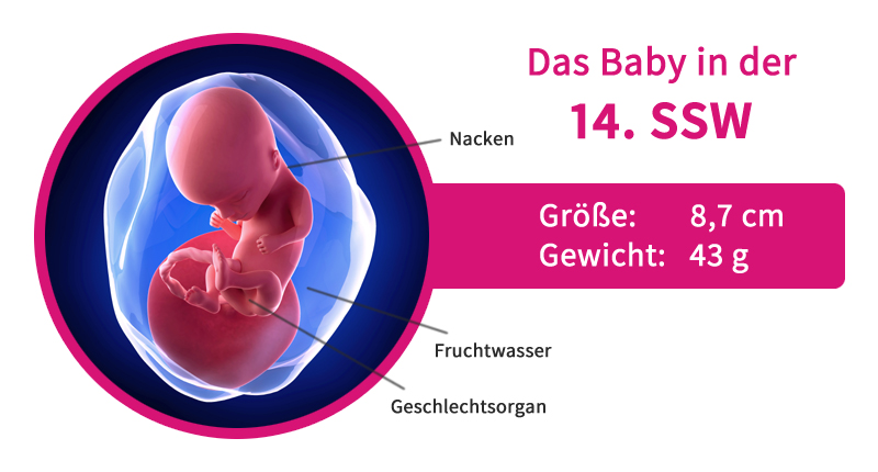 Sex In Der Frühschwangerschaft 6 Ssw
