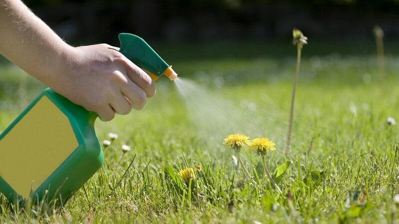 Bevor man sich an die chemische Unkrautvernichtung macht, sollte man die Möglichkeiten der mechanischen sowie der natürlichen Alternativen ausprobiert haben