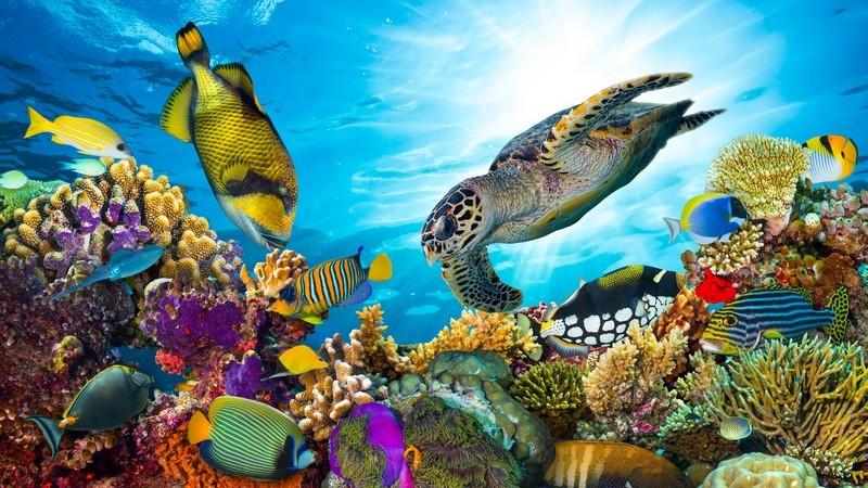 Zu den kennzeichnenden Merkmalen des Fisches gehört das Leben im Wasser - man unterscheidet Knorpelfische sowie Knochenfische