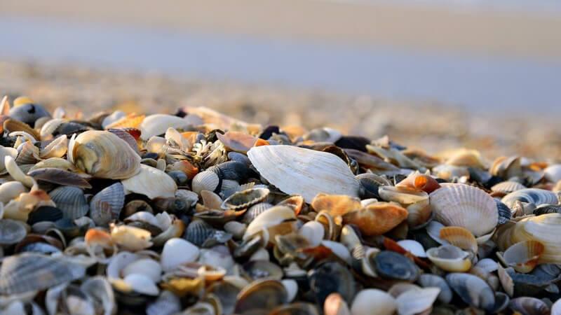 Zu den kennzeichnenden Merkmalen der Weichtiere zählt, dass sie vorwiegend im Meer leben; manche Formen findet man auch im Süßewasser sowie auf dem Festland