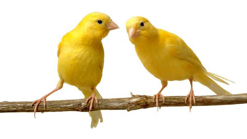 Zu den kennzeichnenden Merkmalen eines Vogels zählen u.a. sein Federkleid, der Schnabel sowie die Flügel