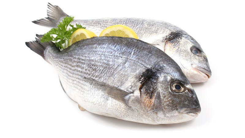 Wissenswertes über Fischöl