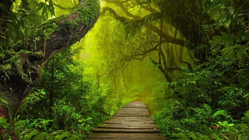 Merkmale von tropischen Regenwäldern