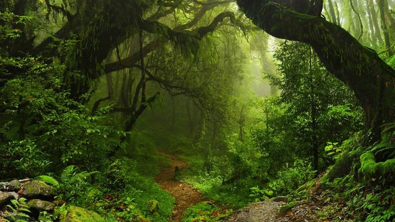 Merkmale von gemäßigten Regenwäldern
