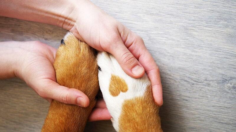 Die Entstehung einer Haustierallergie und wie man eine Tierhaarallergie erkennen und behandeln kann