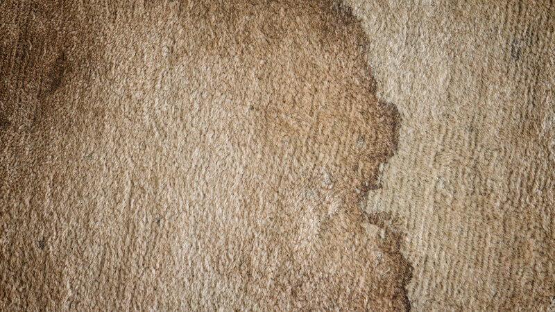 Teppiche gründlich reinigen und Flecken auf dem Teppich effektiv und sauber entfernen