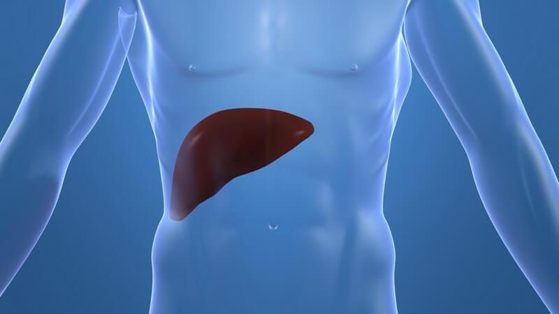 Die Entstehung einer autoimmunen Hepatitis und wie man sie behandeln und erkennen kann