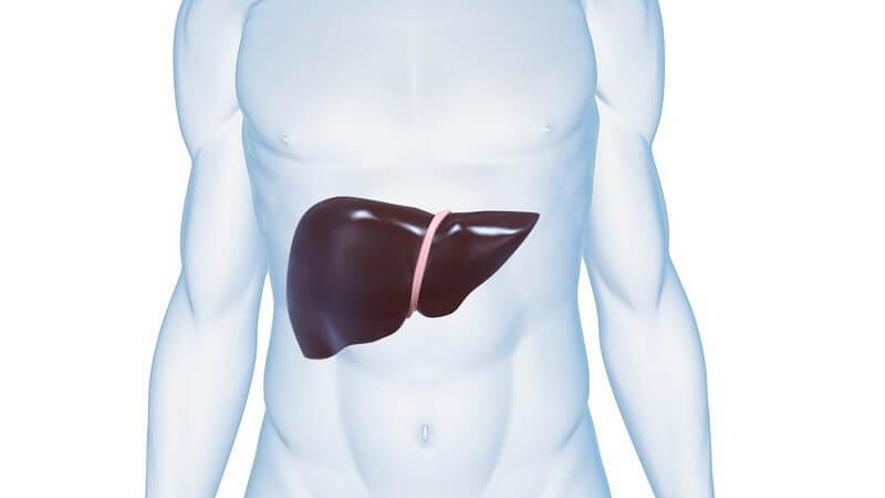 Die Entstehung von Hepatitis und wie man die Leberentzündung erkennen und behandeln kann