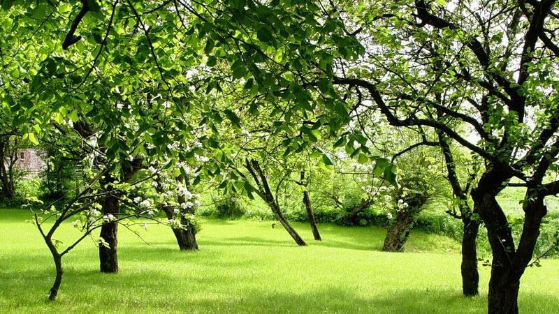 Ein Baum ist Schattenspender und bringt je nach Sorte auch Nahrung - bei der Wahl des passenden Baums gilt es, einige Punkte zu beachten
