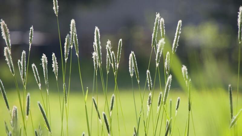 Die Entstehung von Kreuzallergien und wie man sie erkennen und behandeln kann