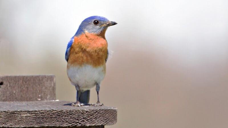 Es gibt unterschiedliche Arten von Vogelhäuschen - vom Futterhaus bis zum Nistkasten; man kann sie im Handel kaufen oder auch selbst bauen