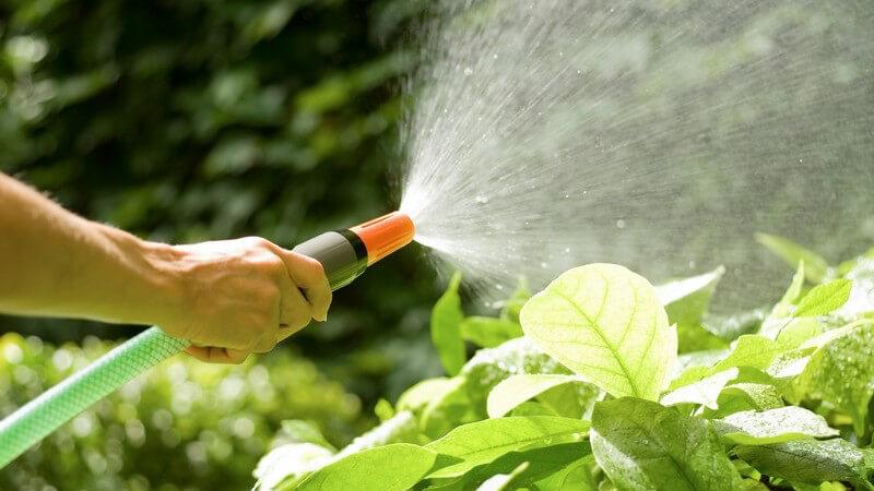 Zum Bewässern des Gartens eignen sich die klassische Gießkann sowie der Gartenschlauch - wer größere Flächen zu bewässern hat, wählt eher eine automatische Bewässerungsanlage