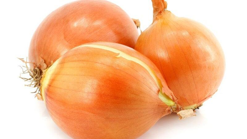 Zwiebeln richtig aufbewahren