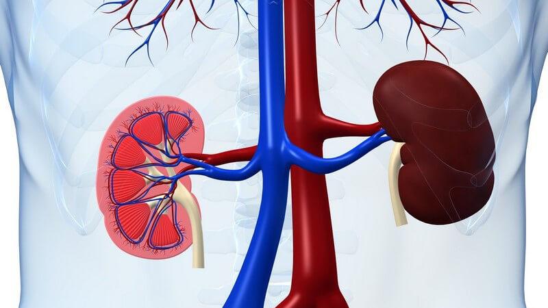 Die Entstehung eines akuten Nierenversagens und wie man es erkennen und behandeln kann