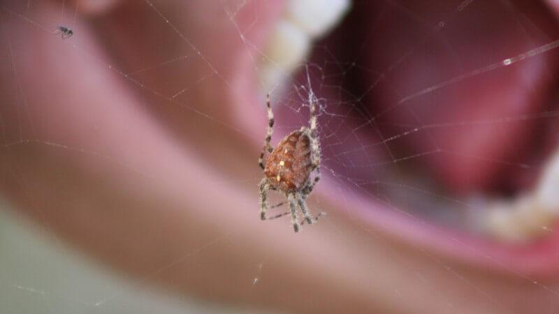 Die Entstehung einer Spinnenphobie und wie man die Arachnophobie erkennen und behandeln kann