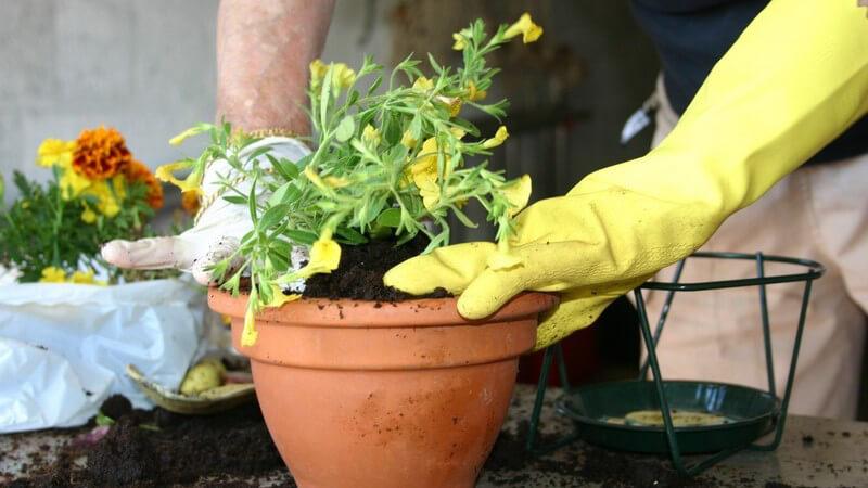 Je nach Pflanzenart und -größe bedarf es eines anderen Blumentopfes - es gibt viele verschiedene Arten in unterschiedlichen Materialien