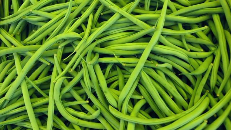 Merkmale und Arten sowie Verwendung der Gartenbohne als Heil- und Nahrungsmittel