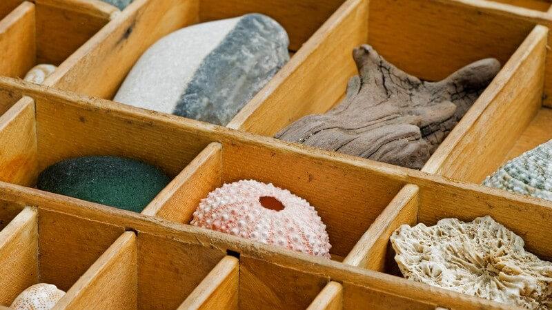 Setzkästen für die Präsentation verschiedenster Sammelgegenstände