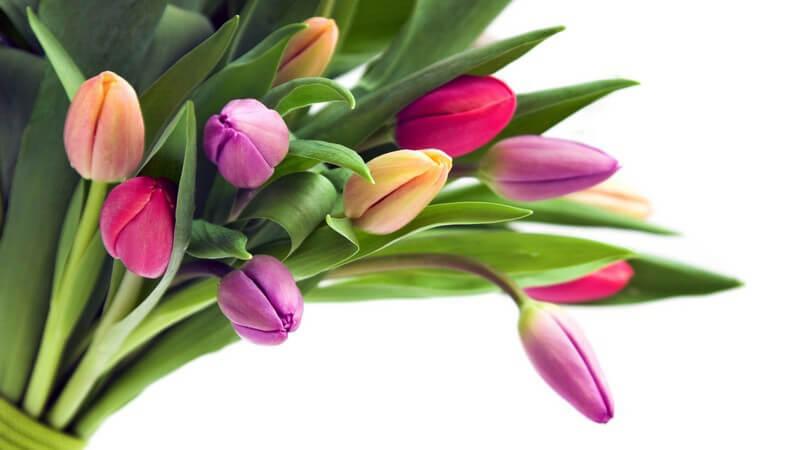 Für jede Blume die richtige Blumenvase