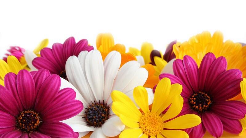 Hinweise zur richtigen Pflege von Blumensträußen